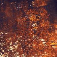 Отражение осени :: Ольга Мальцева