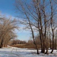 Январский пейзаж :: Dr. Olver  ( ОлегЪ )