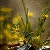 Весенний дождь :: Татьяна Курамшина