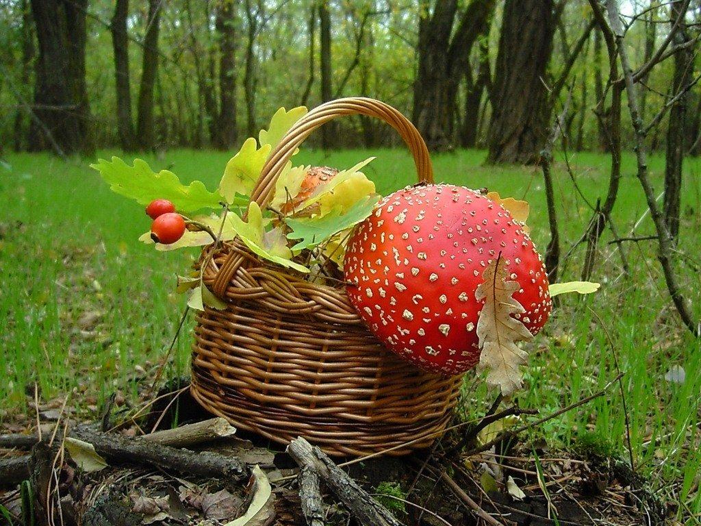 Лесной натюрморт :: Lara - Социальная сеть о фотографии ФотоКто