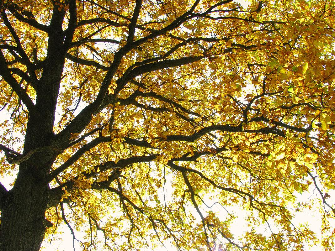 золото осени - Наталья
