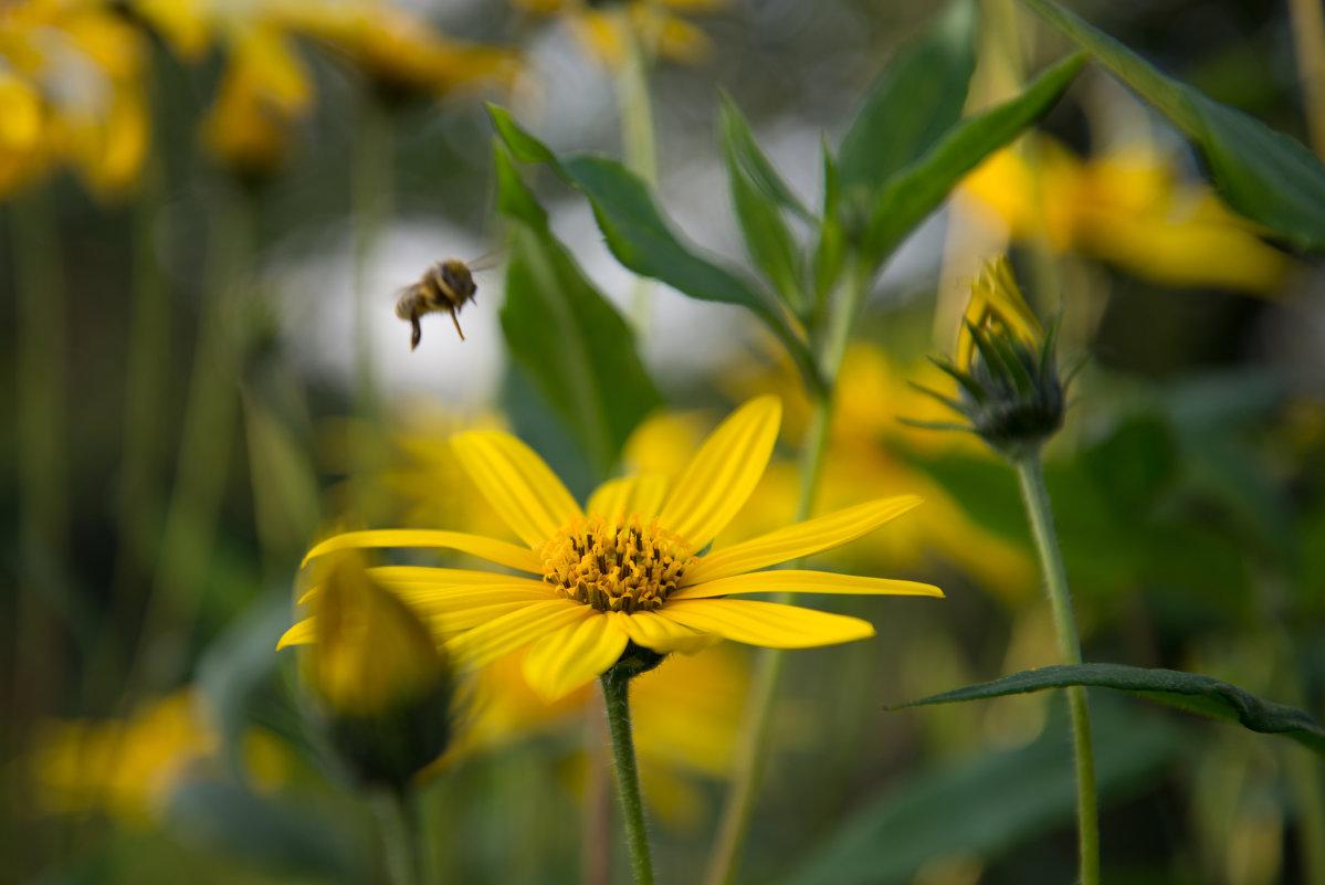 Пчёлка Мая - Андрей