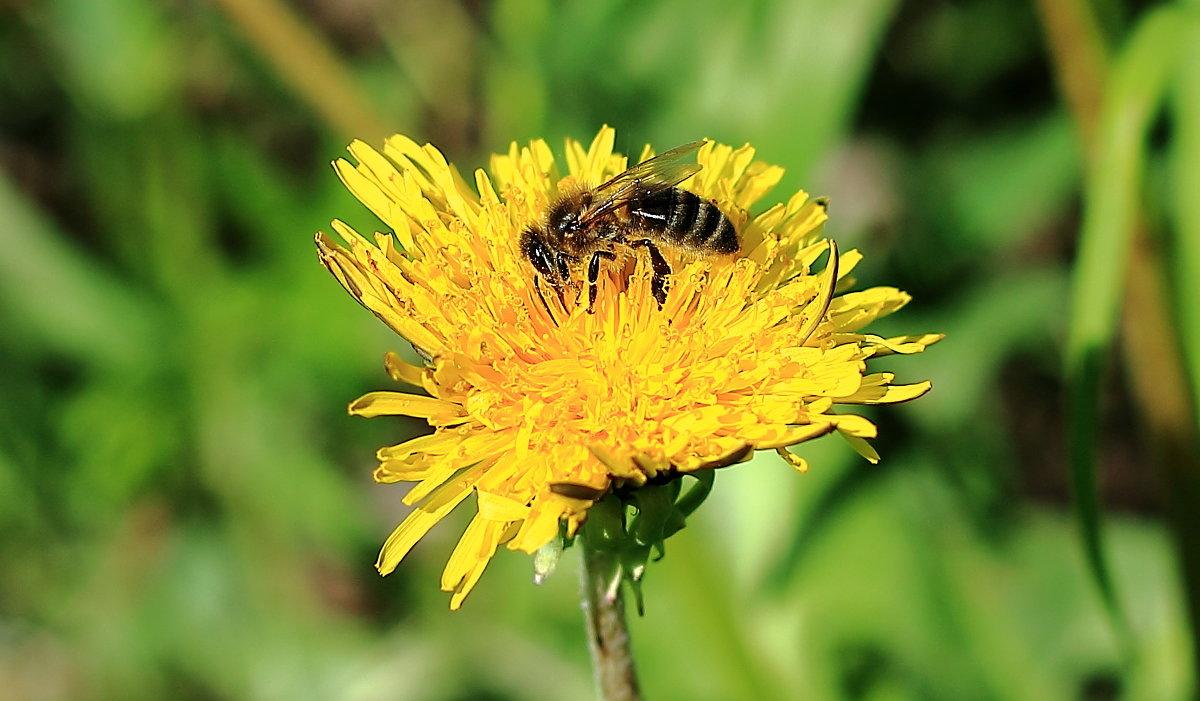 пчелка - Татьяна