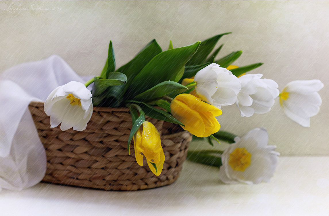 Тюльпаны под дождём - Светлана Л.