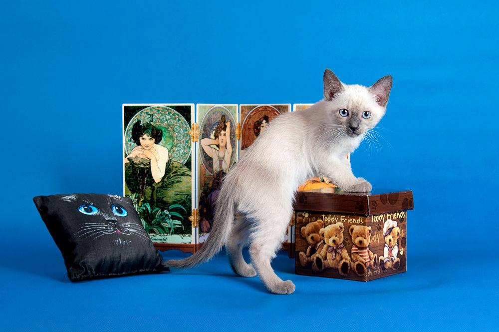 Фотосессия ко дню кошек - Александр Игоревич