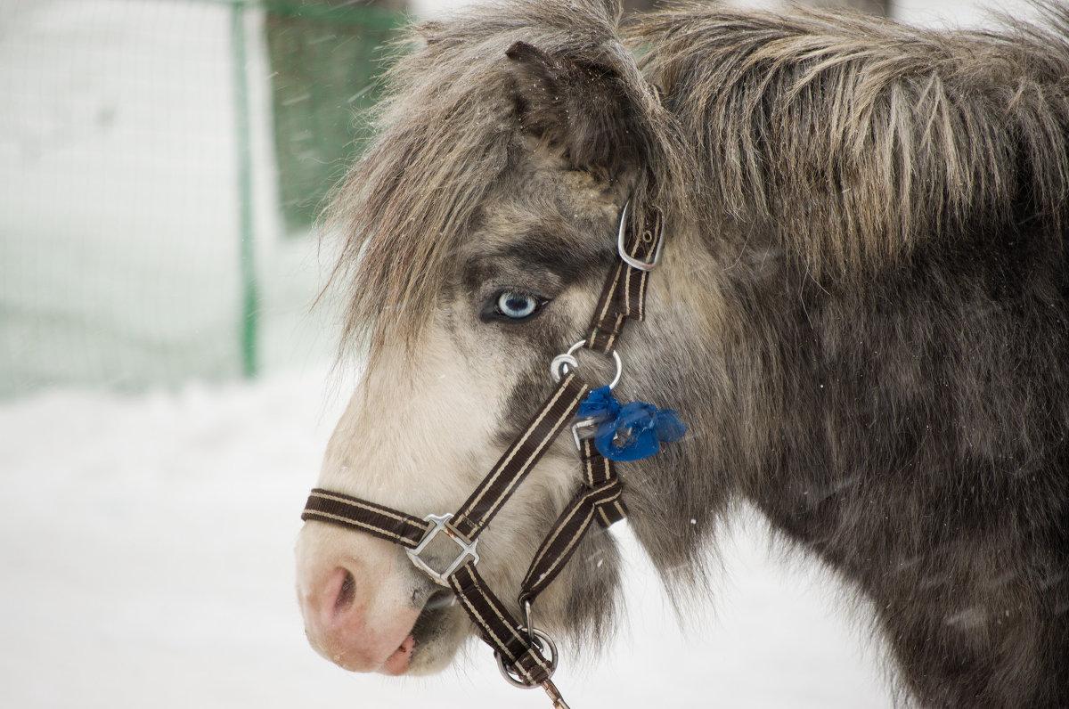 Редкий пони - Антон Ильяшенко