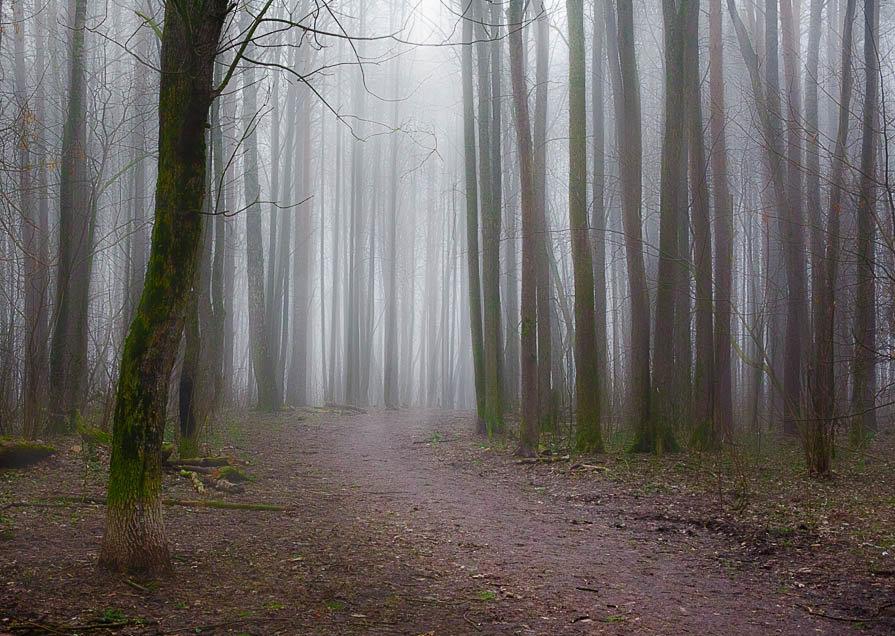Таинственный лес - Юлия Холодкова