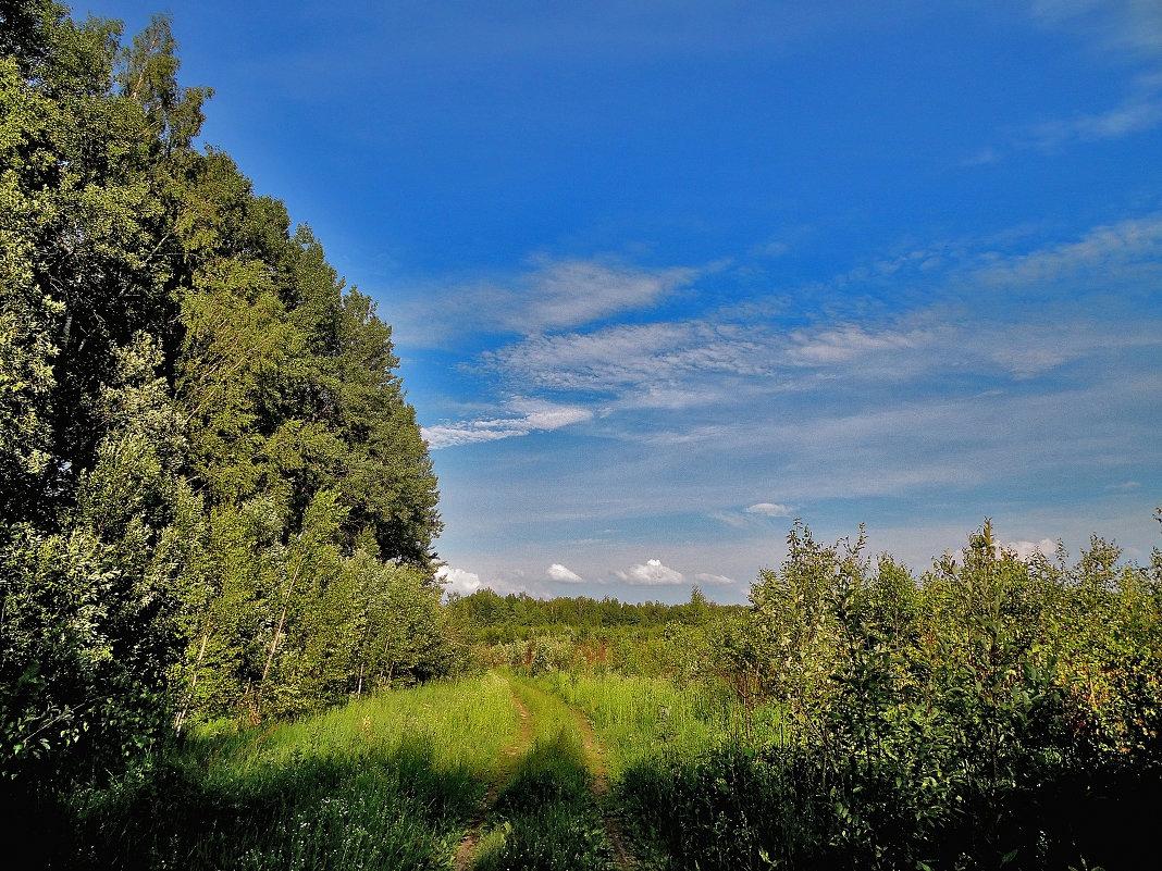 Вдоль леса - Yuriy V