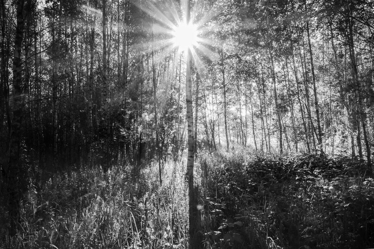 Солнышко лесное - Алексей Окунеев