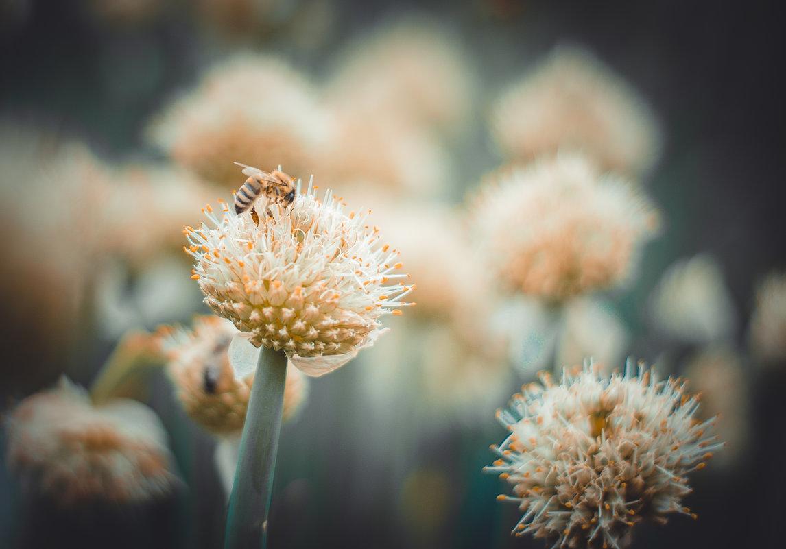 пчелки - Юрий Крутский