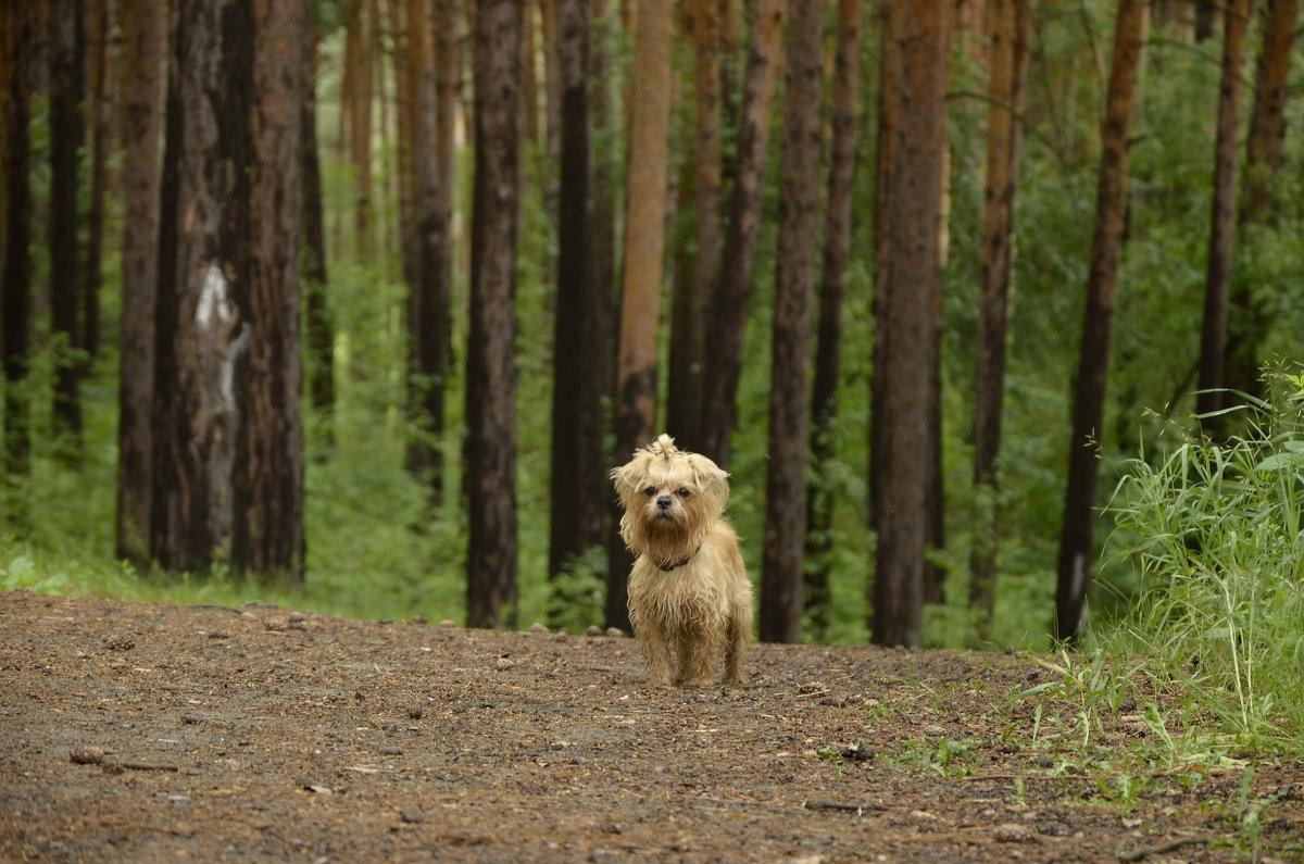 лесной хищник - Николай Воробьёв