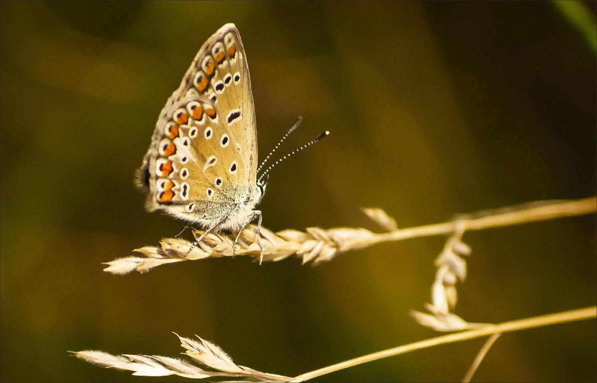 Бабочка - Татьяна Белоусова