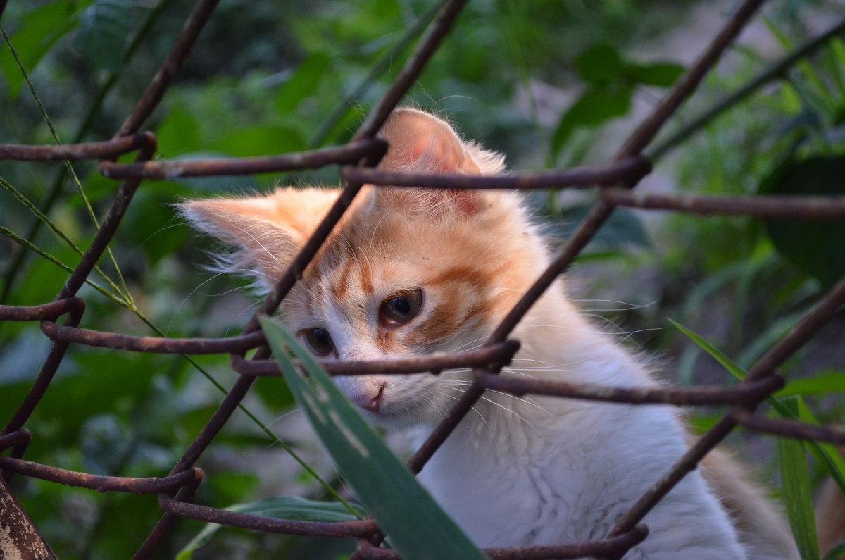 Взгляд котёнка - Леся Орлова