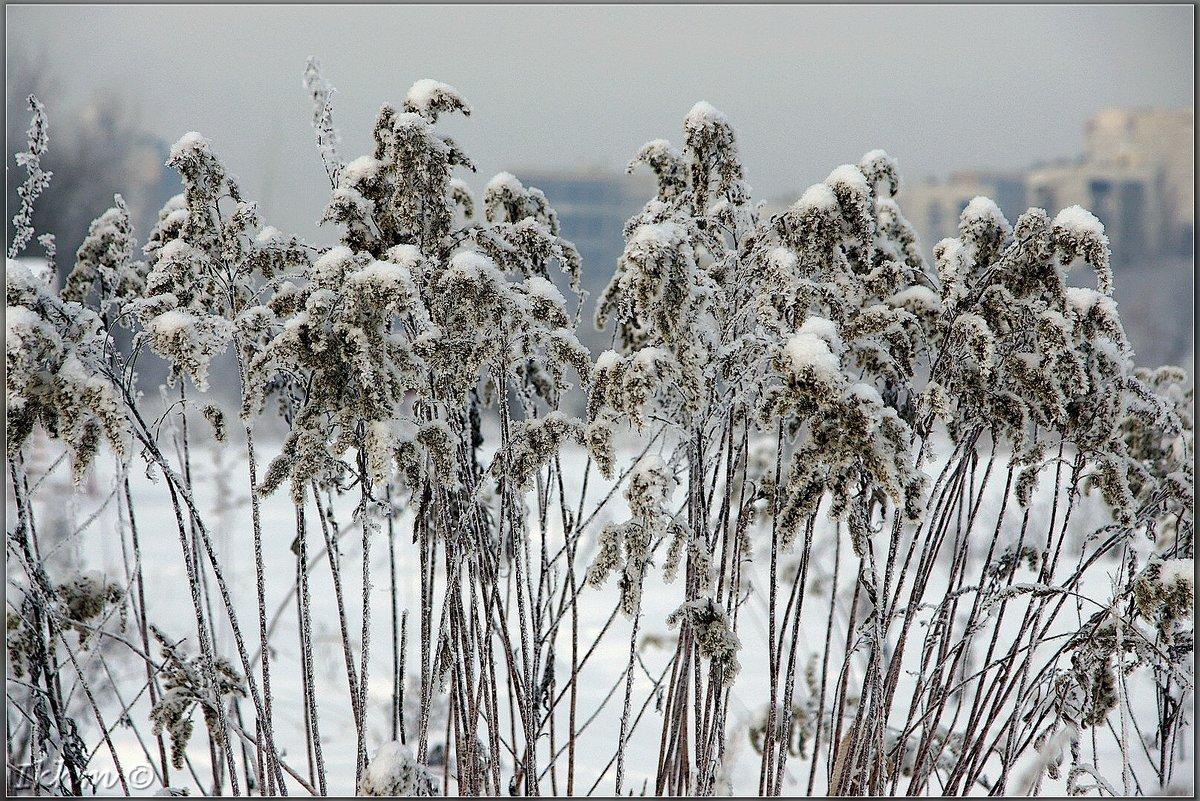 Снежный букет для жаркого дня - Igor Khmelev