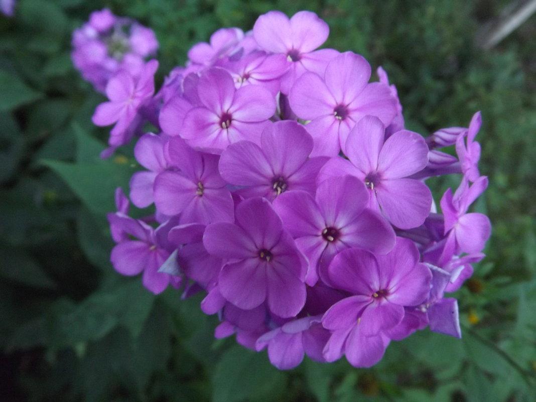 Фиолетовое настроение - Татьяна Островская