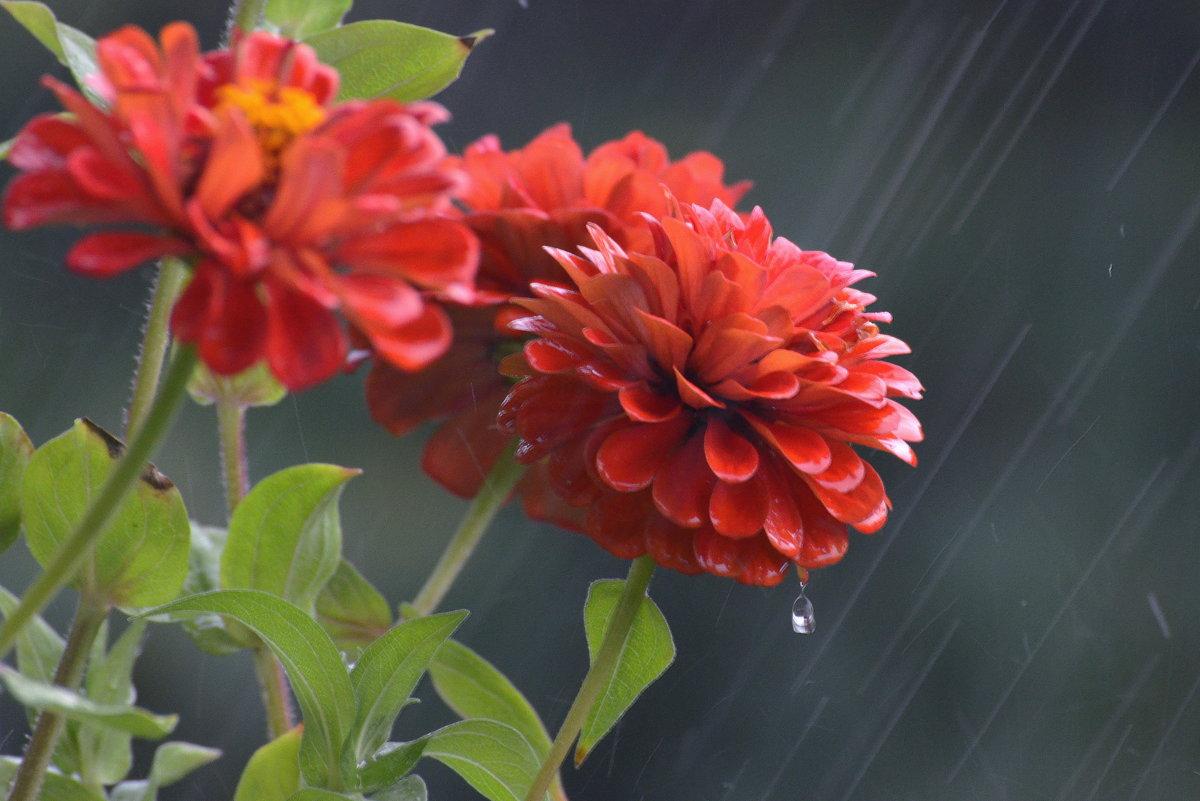 Дождь... - mv12345 элиан