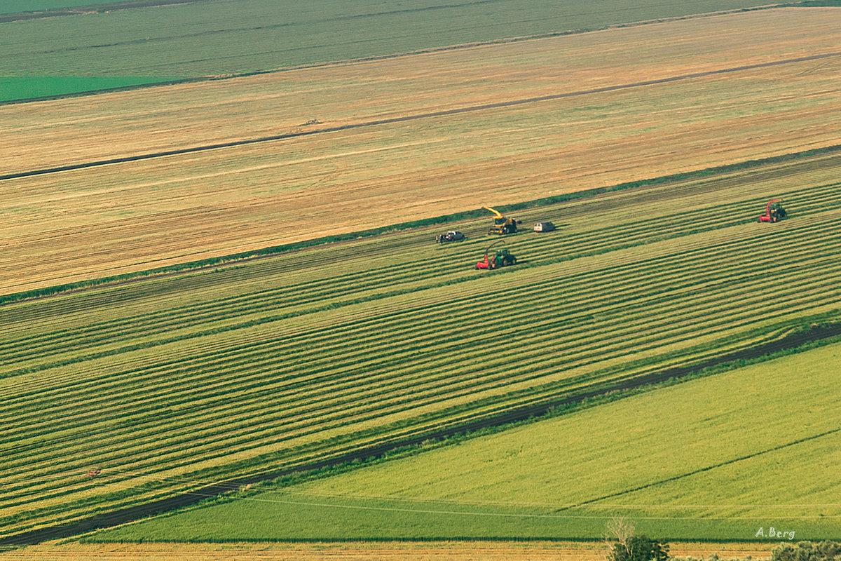 Урожай - Arkady Berg