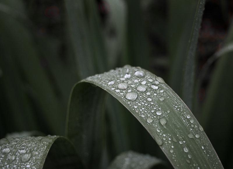 Дождь прошёл... - Caba Nova