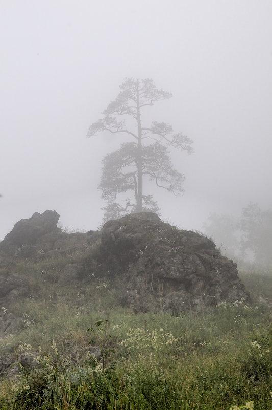 Туман - туманище - Владимир Смирнов