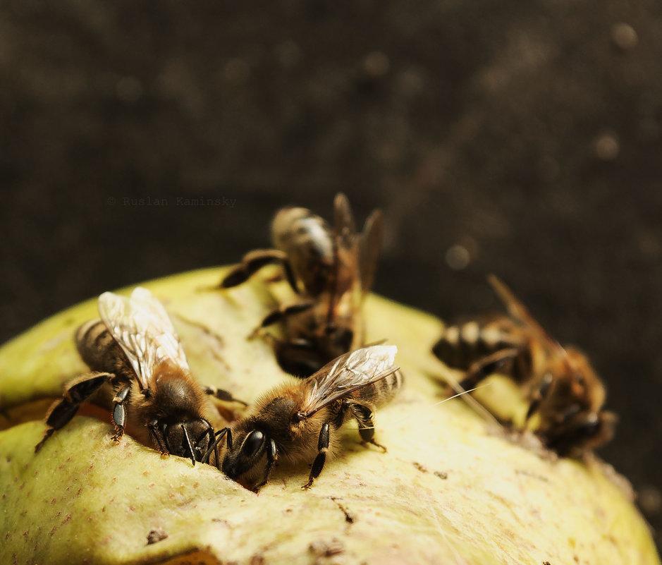 Пчелы едят грушу - Руслан