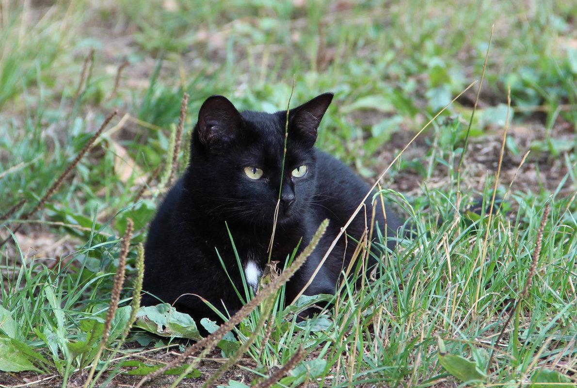 Кошка в дозоре - Александр Быков