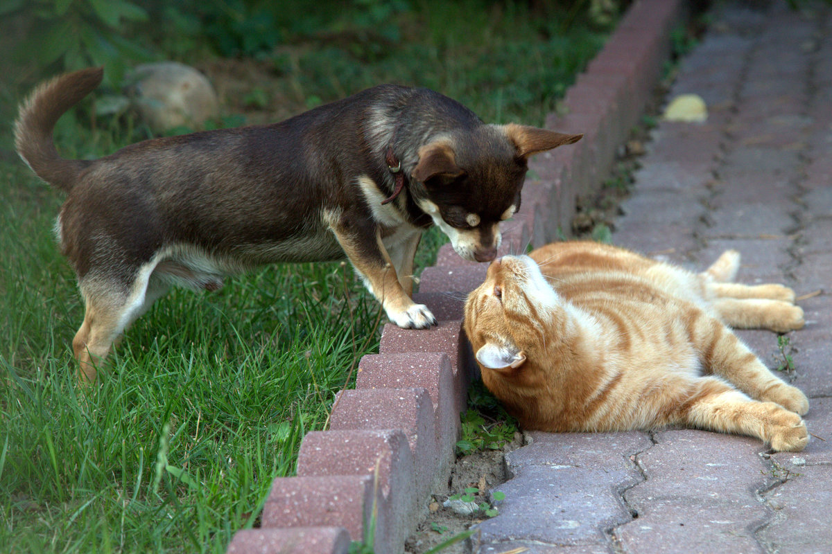 Кот и пёс - Евгения Иванова