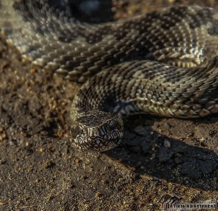 змейя - Эрик