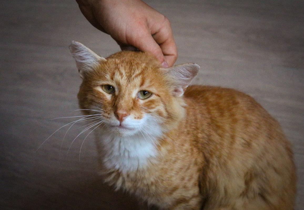 грустныйт кот - Евгений Тихонов