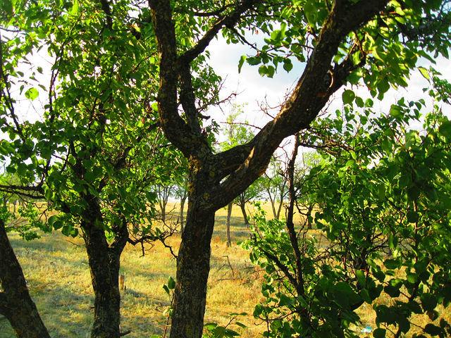 деревья - Татьяна Королёва