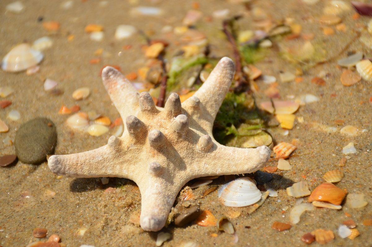 Натюрморт с морской звездой - Светлана Шарафутдинова