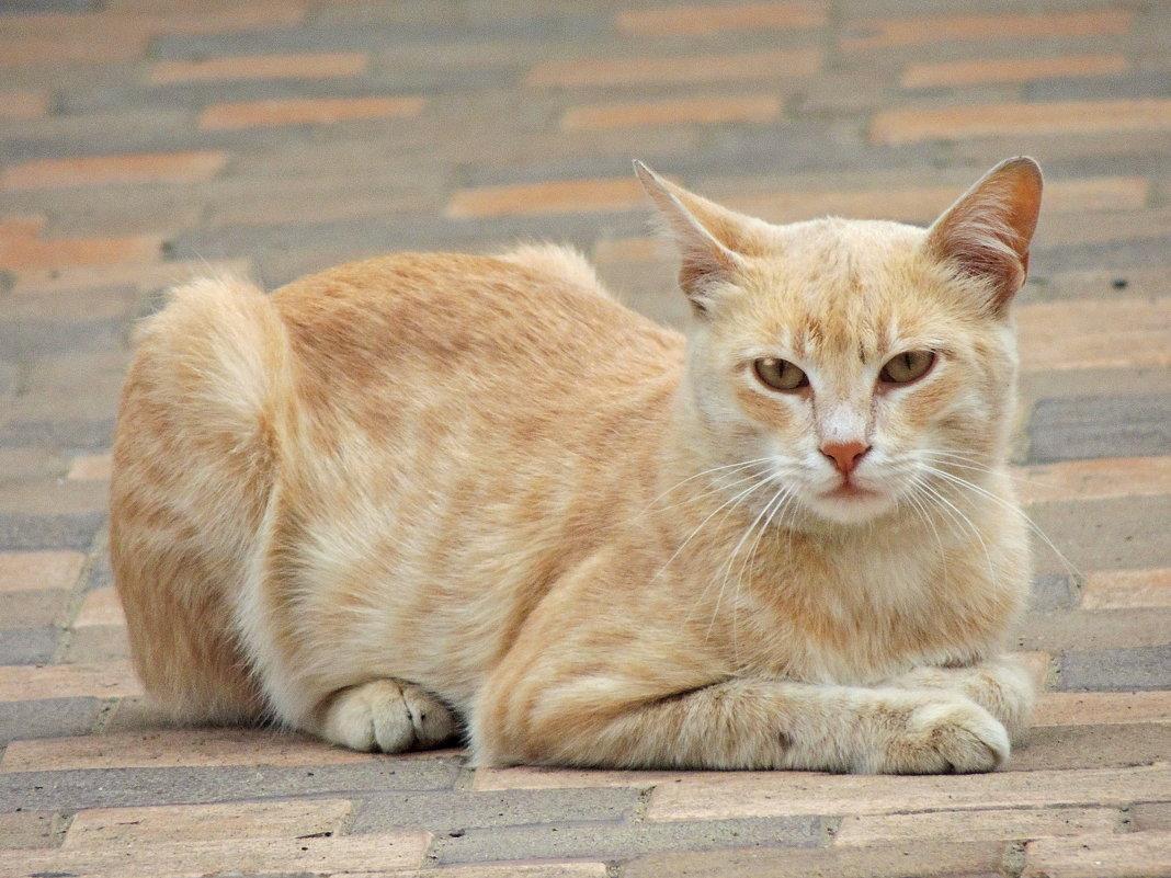 Кот в пастельных тонах - Алексей Меринов