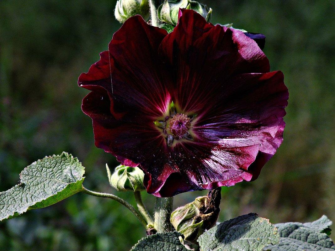 Цветок из клумбы - Роман Кляпчин