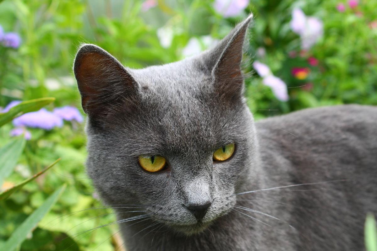 Что думают коты... - Allekos Rostov-on-Don