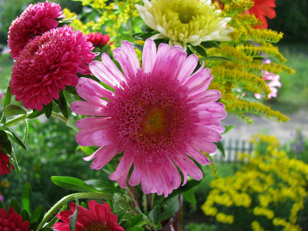 розовое солнышко - Наталья