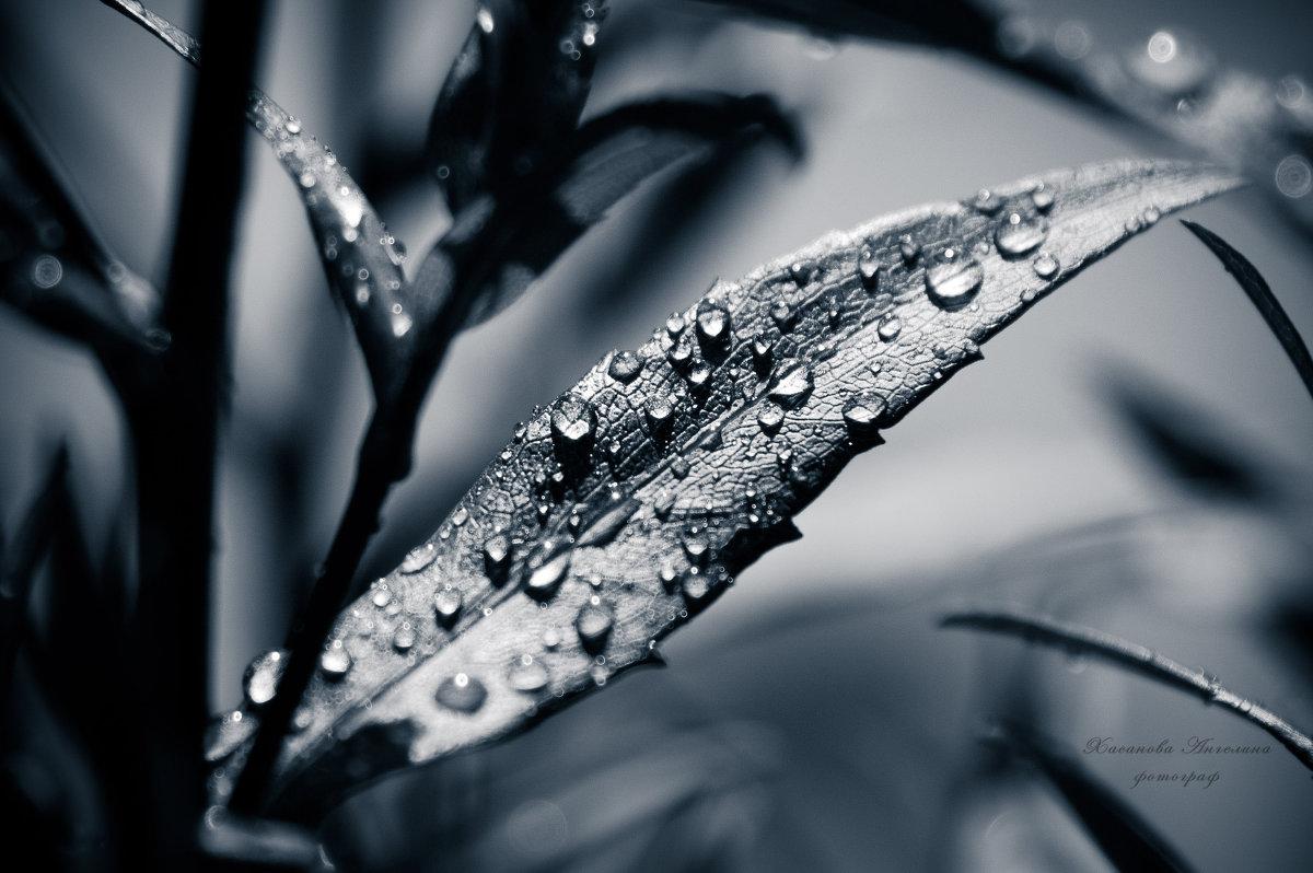 Застывшие капли росы на листе... - Ангелина Хасанова