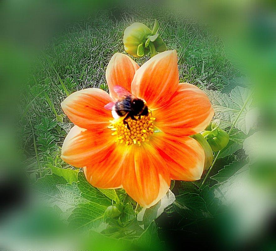 Цветок и шмель. - Oleg4618 Шутченко