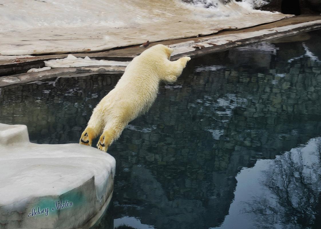 медведи учатся летать - Алексей Никитин