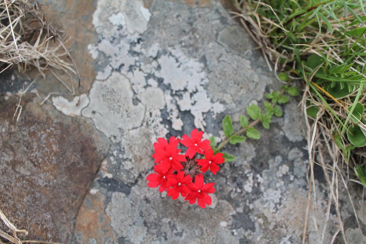 каменный цветок - нина полянская