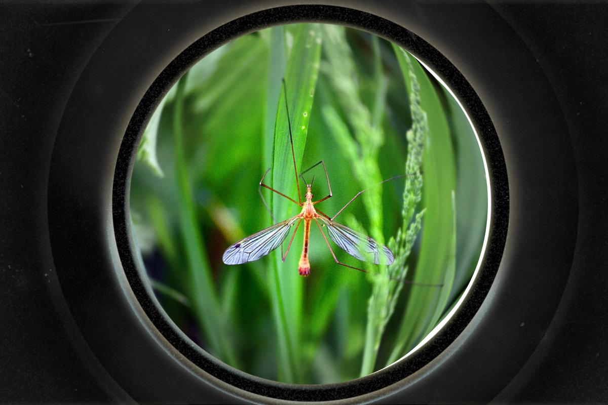 Комарик в зеленной стране - Nina Streapan