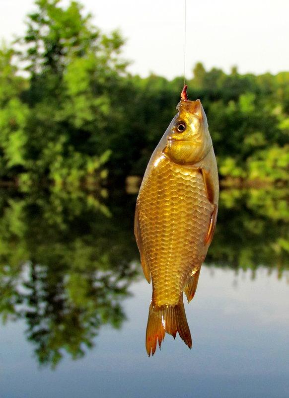 Как взмолится золотая рыбка,голосом молвит человечьим... - Татьяна Колесникова