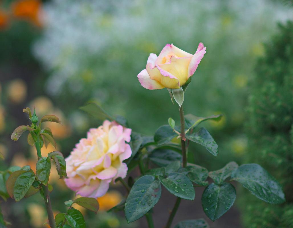Цветы в монастырском саду. - Геннадий Александрович