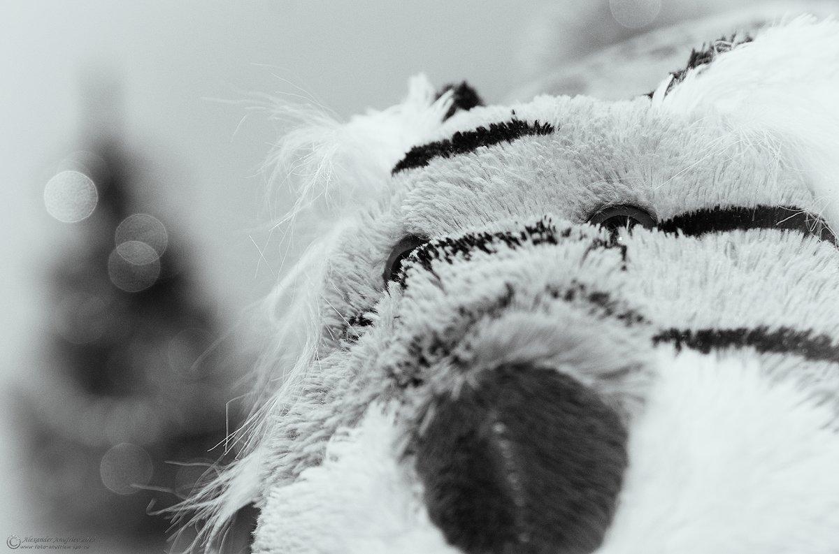 Тигр скучает!!! - Александр Ануфриев