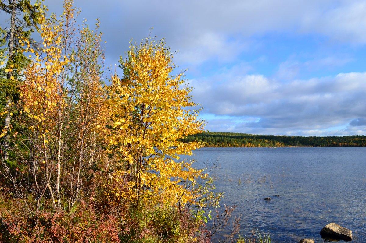 Осень в золоте - Ольга