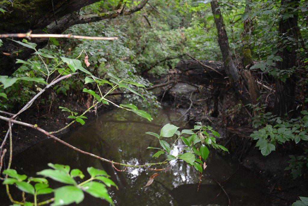 Таинственный лес - Оксана Провоторова