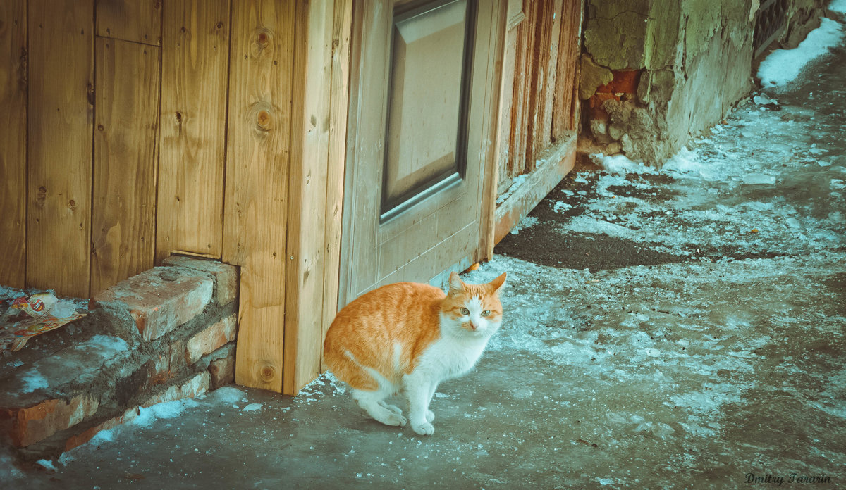 Не пускают домой - Дмитрий Тарарин