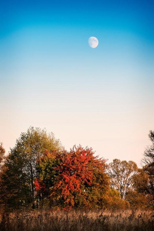 Луна и осень - Андрий Майковский
