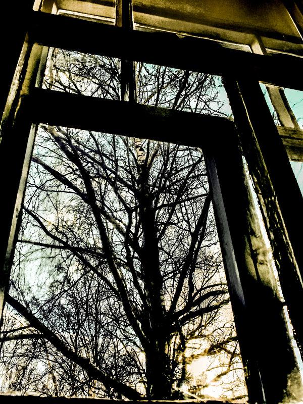 Старая берёза под моим окном... - Михаил