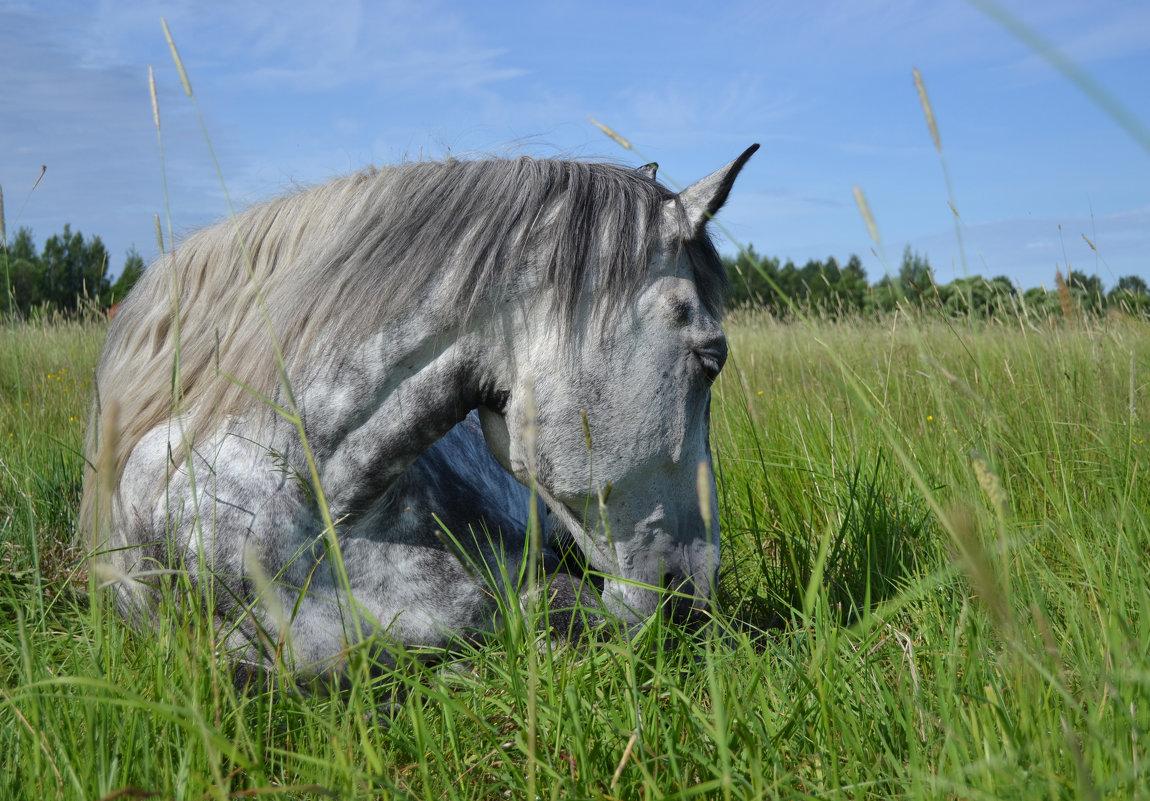 Среди травы под синим небом спал серый конь... - Елена Глебова
