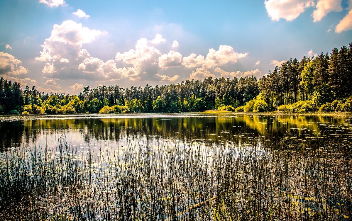 Лесное озеро - Лёша