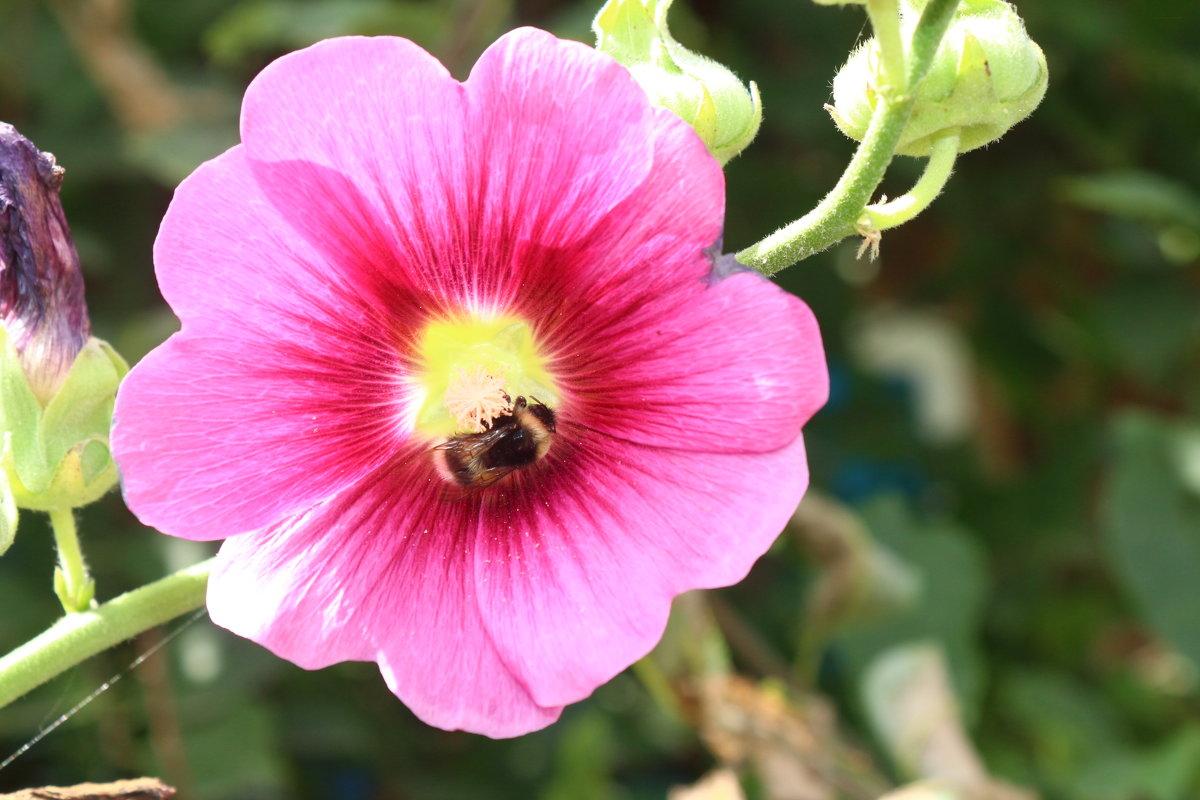 Пчелкааааа - Nadezhda Ulitina